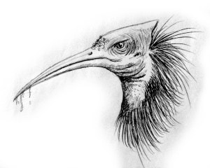 Stymphalian bird bw