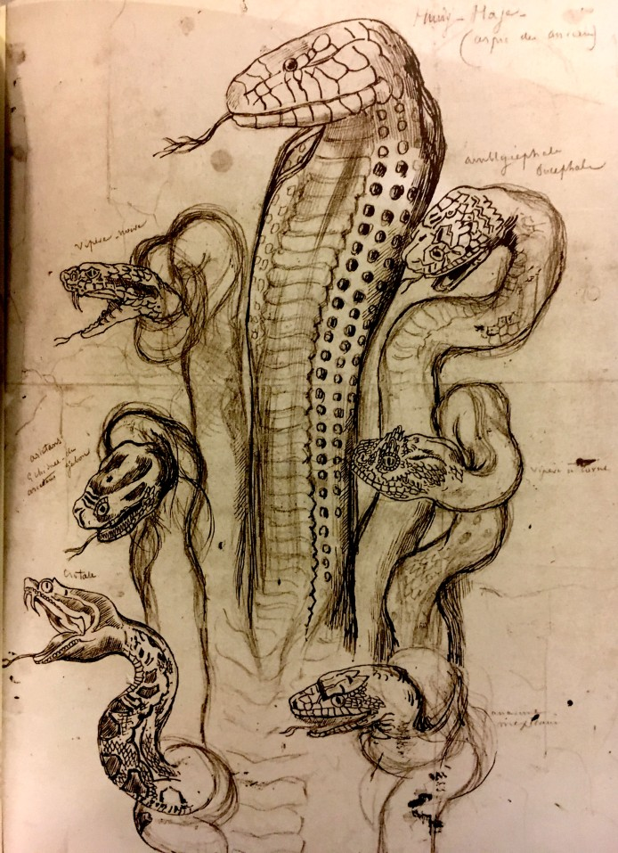 hydra head taxonomy