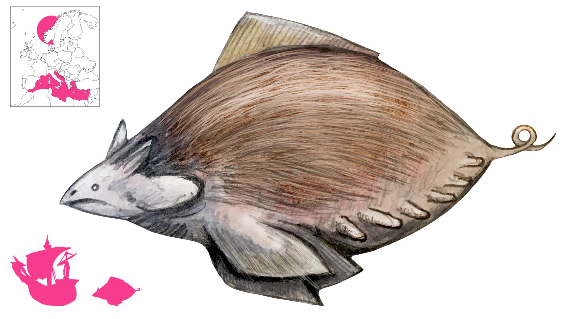 Swamfisk final - Copy