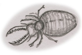 Myrmecoleon antlion